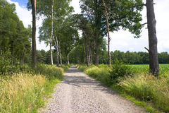 Rural path. Leading in a forest Stock Image