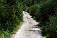 Rural path. With closed vegetation Royalty Free Stock Images