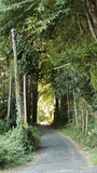 Rural path Royalty Free Stock Photography
