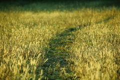 Rural path Royalty Free Stock Image