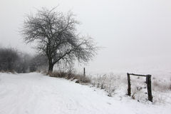 Rural path and leafless tree in winter Royalty Free Stock Photo