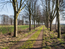 Rural path between rows of beeches Stock Images