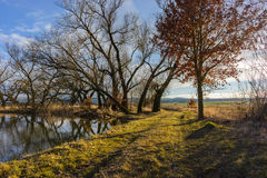 Rural path by the small lake. Stock Image