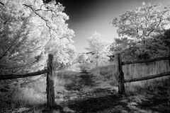 Rural Path in Texas. Rural Texas fenced in pasture and fence Stock Images