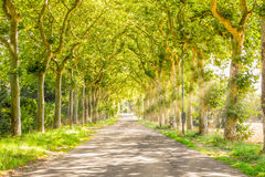 Rural path with trees and light rays. France royalty free stock photo