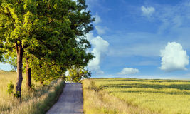 Rural path with trees next to meadows Stock Photography