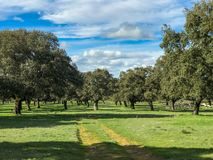 Rural pathway across the pasture with holm oaks and blue sky and clouds in Spain. Rural pathway across the pasture with holm oaks and blue sky and clouds Stock Photography