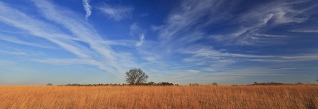 Rural peaceful scenery with deep blue sky Royalty Free Stock Images