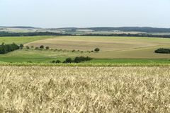 Rural pictorial agriculture scenery at summer time Royalty Free Stock Photos