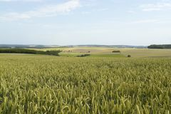 Rural pictorial agriculture scenery at summer time Royalty Free Stock Image