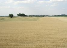 Rural pictorial agriculture scenery at summer time Royalty Free Stock Photography