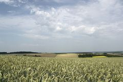 Rural pictorial agriculture scenery at summer time Royalty Free Stock Images