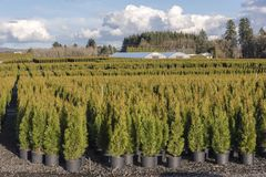 Rural plant farm Oregon state. Royalty Free Stock Images