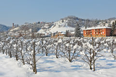 Rural plantation covered with snow in Piedmont, Italy. Stock Image