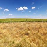 rural pola Zdjęcie Royalty Free