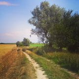 Rural Poland, road in summer fields Royalty Free Stock Photos