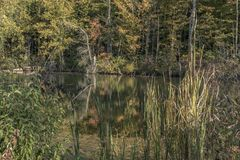 Rural pond. A pond in a rural area royalty free stock image
