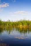 Rural pond tranquil scene Stock Image