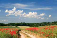 Rural poppy field with country road landscape Royalty Free Stock Photography