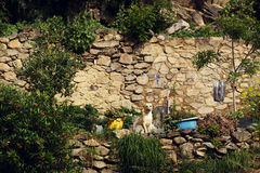 Rural Portrait of a Dog. Dog sitting on a rock wall in Ollantaytambo, Peru stock image
