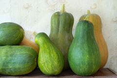 Rural pumpkins harvest. Yellow and green pumpkin srural harvest stock image