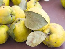 Rural quince Royalty Free Stock Photos