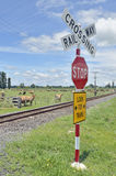 Rural railway crossing Royalty Free Stock Image
