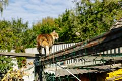 Rural red cat on the old wooden fence.  Royalty Free Stock Images