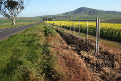 Rural road. Between canola and wheat fields near Durbanville South Africa Royalty Free Stock Photos