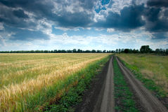 Rural road. Stretching out into the wheat field Stock Image