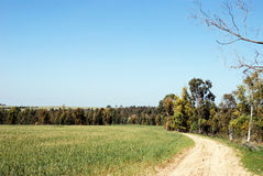 Rural road. Leaving afar near a field with turning green shoots Royalty Free Stock Image