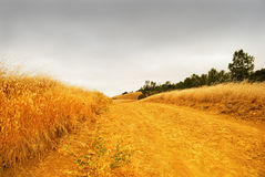 Rural Road. With dry grass on the sides disappearing into the stormy sky Stock Image
