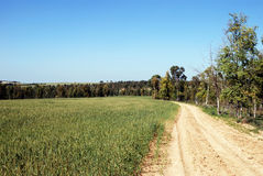 Rural road. Leaving afar near a field with turning green shoots Royalty Free Stock Photos