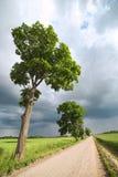 Rural road. Stock Photos