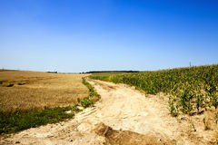 The rural road. Not asphalted rural road through an agricultural field Royalty Free Stock Photography