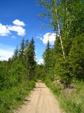 Rural road. A road path not used much atop a hill Royalty Free Stock Photos