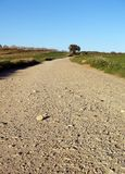 Rural road. Between fields Royalty Free Stock Photography
