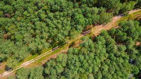 Rural road from above. Aerial shot taken with drone showing summer green forest with unpaved roadway running through coniferous trees in sunlight stock footage