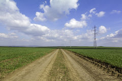 Rural road. In a agriculture field Stock Photography
