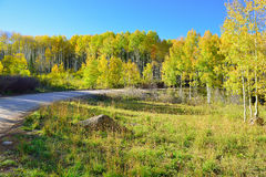 Rural road through the alpine scenery of yellow and green aspen during foliage season Royalty Free Stock Photos