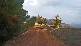 A rural road amid trees. It`s the Algerian countryside.The picture represents a rural road amid trees In autumn.Suitable for lovers of isolation royalty free stock photos