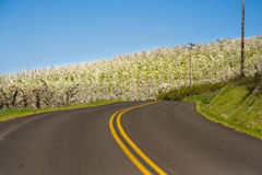 Rural road, apple orchards Royalty Free Stock Images