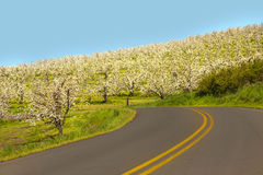 Rural road, apple orchards Stock Photo