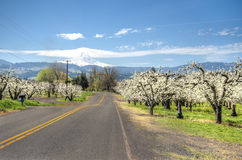 Rural road, apple orchards, Mt. Hood Royalty Free Stock Photography