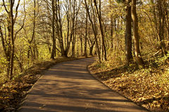 Rural road in autumn. Lined with trees and golden leaves royalty free stock photo