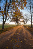 Rural road in autumn. Stock Image