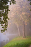 Rural road through the autumn park on a misty morning. Stock Photo