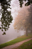 Rural road through the autumn park on a misty morning. Stock Photos