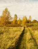 Road in autumn wood. Rural road in autumn wood on background blue sky Royalty Free Stock Images
