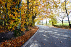 Rural Road in the autumn with yellow trees Stock Images